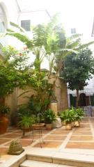 palma patio (2).JPG